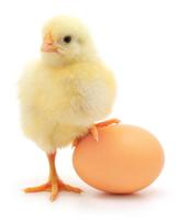 eggster